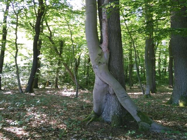 Cappenberger Wald Naturwesen Walpurgis